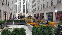 2016-10-19 - Rockefeller Center - Channel Gardens (zigwaffle) Tags: 2016 nyc newyorkcity manhattan timessquare rockefellercenter saintpatrickscathedral fifthavenue wretchedexcess centralpark
