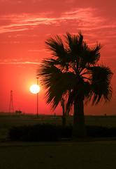 Sunset! (aliffc3) Tags: sunset mesaieed nikond750 nikon70200f4 landscape silhouette qatar