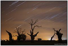 ST#46-52 The Dead Oaks (seb a.k.a. panq) Tags: 52 52weeks stars startrails st sebastianbakajphotography dead oaks field night nightphotography nightscape nightsky noctography silhouette dark