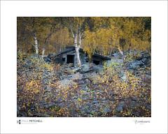 Hodge Close (tobchasinglight) Tags: hodgeclose tibberthwaite lakedistrict slatemine disused lakes derwentwater autumn silverbirch abandoned