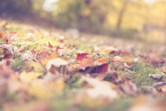 Hello October (Hello Little Wing) Tags: october fall autumn automne octobre fallenleaves leaves feuilles perspective softtones canon canongirl nature