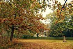 No title (frata60) Tags: nikon d300s netherlands nederland landscape landschap vosbergen eelde drenthe nature natuur nederlandvandaag autumn herf herfst red boom trees tree
