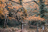 Horner Woods (andrew.demora) Tags: exmoor horner