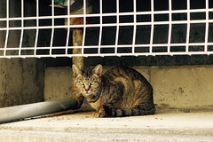Today's Cat@2016-11-02 (masatsu) Tags: cat thebiggestgroupwithonlycats catspotting pentax mx1 osaka