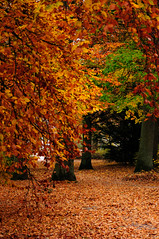 _THJ8287.jpg (ThiagoJ) Tags: autumn sweden sverige fall suécia scandinavia suã©cia lund skã¥nelã¤n se