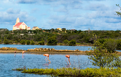 Curaao,  2016 (Bob (sideshow015)) Tags: flamingo nikon 7100 pink water island curaao bird oiseau illes caribbean cruise tour