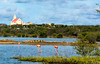 Curaçao,  2016 (Bob (sideshow015)) Tags: flamingo nikon 7100 pink water island curaçao bird oiseau illes caribbean cruise tour