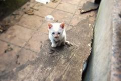 Cuesta arriba (nora4santamaria) Tags: cat cats gatos felinos 7dwf