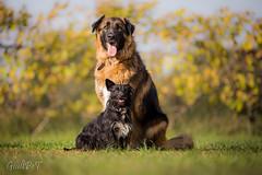 Il gigante e la bambina (GiulyPet92) Tags: dogs love family famiglia cani adventuredog