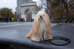 washington square park (Charley Lhasa) Tags: ricohgrii grii 183mm 28mm35mmequivalent iso400 secatf28 0ev aperturepriority pattern noflash r010576 dng uncropped taken161124143545 uploaded161125233453 4stars flagged adobelightroomcc20157 lightroomcc20157 adobelightroom lightroom charley charleylhasa lhasaapso dog bench granitebench cloudy overcast grey leash lead washingtonsquarearch washingtonsquarepark wsp nycparks citypark urbanpark greenwichvillage manhattan newyorkcity nyc newyork ny tumblr161125 myfavorites moo moocd buscd httpstmblrcozpjiby2f8csrw