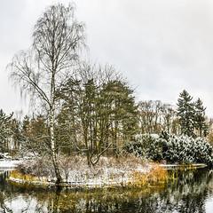 _DSC0657 - _DSC0658 (Marco Sky) Tags: snow park poniatowskiego nikon d5300 lodz poland winter day lake island reflection water