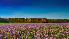 autumn 12(fairoul BE) (Yasmine Hens) Tags: landscape fairoul hensyasmine namur belgium wallonie europa aaa  belgique blgica    belgio  belgia   bel be