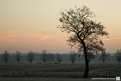 DN9A9281-2 (Josette Veltman) Tags: sunrise zonsopkomst salland overijssel soeslo zwolle landschap natuur landscape nature netherlands