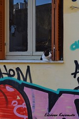 Chania old town (Eleanna Kounoupa) Tags: windows graffiti greece crete oldtown chania