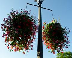Hanging Beautifully