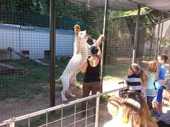 20150919_113330 (mjfmjfmjf) Tags: oregon zoo 2015 greatcatsworldpark