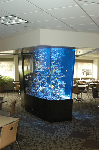 1300 Gal Custom Living Reef - Corporate Office - CT - 2