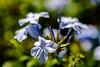 Blume auf Mallorca (Sascha Wolf) Tags: sun plant color macro nature nikon bokeh outdoor natur pflanze micro d750 es 60mm nikkor blume mallorca sonne farbe spanien illesbalears sacoma