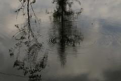 Anderswelt (gripspix (OFF)) Tags: reflection water wasser mud surface spiegelung schlamm ch4 greenhouseeffect oberfläche wavelet methan treibhauseffekt kleinewellen sapropel wellenringe faulschlamm 20151006 sumpfgas