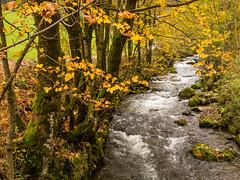 Appenzellerland (pboehi) Tags: autumn mist mountains switzerland alpstein appenzellerland