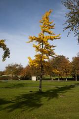 Floriade_251015_31 (Bellcaunion) Tags: park autumn fall nature zoetermeer rokkeveen florapark