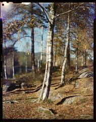 Svartkulp_oct '15_FujiNPS ([vla:d]) Tags: autumn light film norway woods kodak atl 4x5 leak expired 1500 aero graflex sognsvann speedgraphic ektar 2015 jobo aeroektar fujihunt