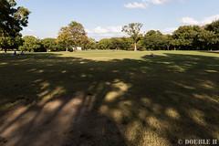 Expo '70 Park 2015.10.6 (11) grass and shadow (double-h) Tags: shadow bird dusk  eveninglight    japanesetit expo70commemorativepark ef1635mmf4lisusm eos7dmarkii