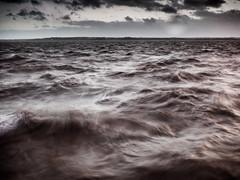 Barney (Maggie's Camera) Tags: water liverpool river barney mersey november2015
