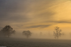 Winter warmth. (AlbOst) Tags: trees winter mist pastel diffused winterbeauty pasteltones mistymorning diffusedlight softcolours daarklands laquintaessenza