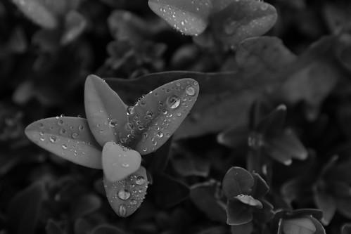 Early ©  Still ePsiLoN