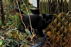 icky the kitty (SunnabunnyPhotography) Tags: plants brown playing black green cat outside kitten blind foliage climbing multi selective roaming focal