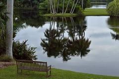 Tranquility (ACEZandEIGHTZ) Tags: plants lake waterfront southmiami fairchildtropicalgardens frameit contactgroups magicmomentsinyourlife