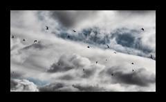 Wolkenreise (LL) Tags: sky birds clouds cloudy himmel wolken vgel wolkig wolkenvgel