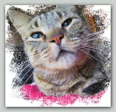 A Crooked Selfie (gtncats) Tags: pet texture cat canon eyes tabby frame loved selfie autofocus felineface felineportrait vg~catsgallery photographyforrecreation canong16 canonpowershotg16