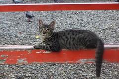 Today's Cat@2016-10-03 (masatsu) Tags: cat thebiggestgroupwithonlycats catspotting pentax mx1
