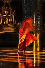 _MG_5389-le-17_04_2016_wat-thail-wattanaram-maesot-thailande-christophe-cochez (christophe cochez) Tags: burmes burma birmanie birman myanmar thailand thailande maesot myawadyy monk bonze novice religion watthailwattanaram travel voyage bouddhisme buddhism portrait