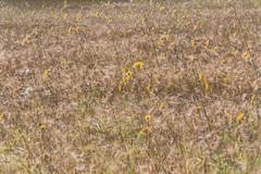 Field (pni) Tags: flower plant field multiexposure multipleexposure tripleexposure j16 jakobstad pietarsaari finland suomi pekkanikrus skrubu pni