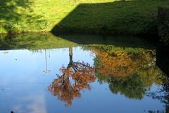 Kopfstand (akaceweha) Tags: herbst autumn baum tree grn green spiegelung wasser water outdoor ruhrgebiet ruhrpott dortmund