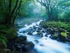 幻想 (tostos1963) Tags: landscape river forest moss primeval japan water