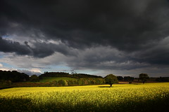 What an October day (Explored) (Robin M Morrison) Tags: field october yellow grey black sky