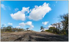 Duinen AWD (voorhammr) Tags: 2016 annevandermeyden amsterdamsewaterleidingduinen blauwelucht herfst herfstkleuren herten spinnenweb zwanen