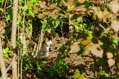 Feral cat () Tags:         cat kitty feralcat animal pretty nature outdoor japan