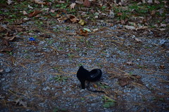 NIK_5079 (cathead77) Tags: wv westvirginia duhringgoodwillroad mercercounty