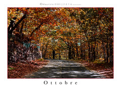 Ottobre (Maurizio ) Tags: ottobre autunno autumn october d810 nikkor afs2470f28 red landscape coulor sicily etna milia etnasud flower