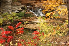 IMG_9266 (Sally Knox Sakshaug) Tags: letchworth state park new york fall autumn october colors leaf leaves orange yellow stone grey gray brown green red beautiful pretty scenic waterfall water white spectacular falls beauty genesee river portagecanyon wolf creek area small delicate simple quiet