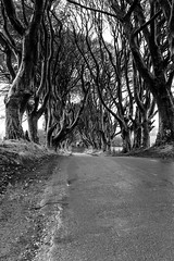 The Dark Hedges. Armoy, Northern Ireland. (jtat_88) Tags: amateur armoy attraction bw beech blackandwhite branches causewaycoastandglens circularpl cokin cokinp120 cokinp125 countyantrim dark darkhedges digital filiminglocation filter fullframe gameofthrones gracehill grass greyscale hedges heritage history hoyapro1digitalcircularpolarizingfilter ilce7 ireland landscape lightroomcc mirrorlesscamera monochrome ndfilter ndgrad ni natural nature neturaldensity northernireland november old photography rare road scenic sony sonyfe2870mmf3556oss sonya7 tobaccofilter tour tourists trees tunnel visitnorthernireland winter wonder unitedkingdom gb 10faves 20faves