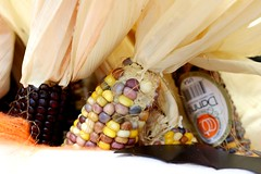 Corn   -  (salomti@ymail.com) Tags: food corn colored color dubai uae emirates pattern vegetables fresh