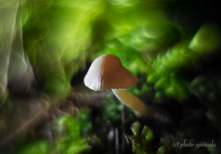 Mushroom in a Mysterious Environment