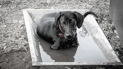 Piwo 2008 (Andie Wandsch) Tags: piwo hund labrador strasenhund haustier street dog animal
