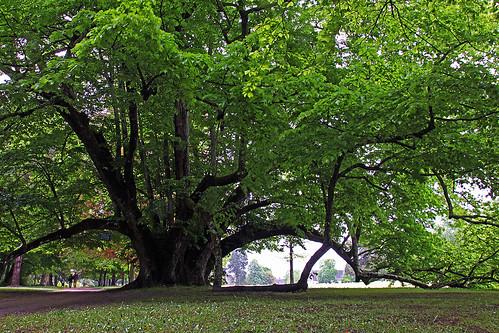 Cheverny parc